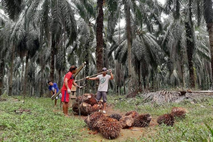Petani Sawit di Siak Dapat Bantuan Modal Usaha Rp 1 Miliar