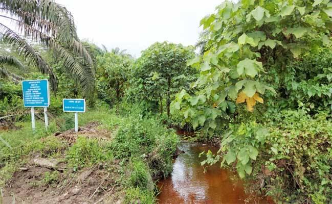 Wilmar Restorasi HCV di Kalimantan Tengah