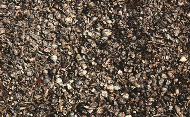 Indonesia Bakal Ekspor 10 ribu Ton Cangkang Sawit ke Jepang