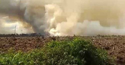 Lahan PT Arara Abadi di Pelalawan Terbakar
