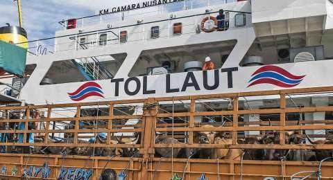 Gunakan Tol Laut, 550 Ekor Sapi Dari NTT Sampai di Pelabuhan Dumai