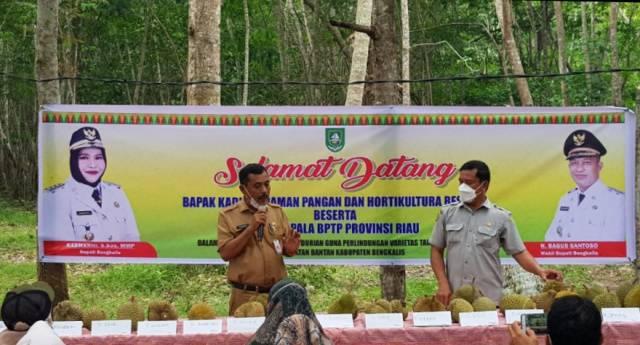 Potensi Genetik Durian Bengkalis Tingkatkan Kesejahteraan Masyarakat