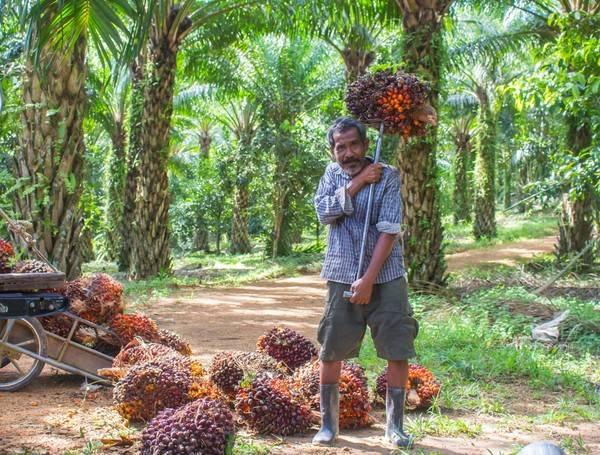 Petani Swadaya Harus Bermitra untuk Dapatkan Harga Setara