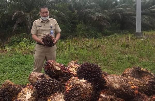 Disbun Riau Anjurkan Petani Swadaya Gabung Petani Mitra