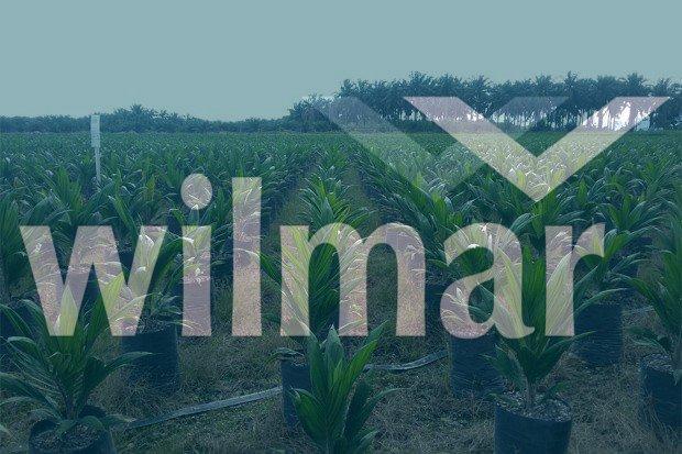 Perkebunan Kelapa Sawit Wilmar